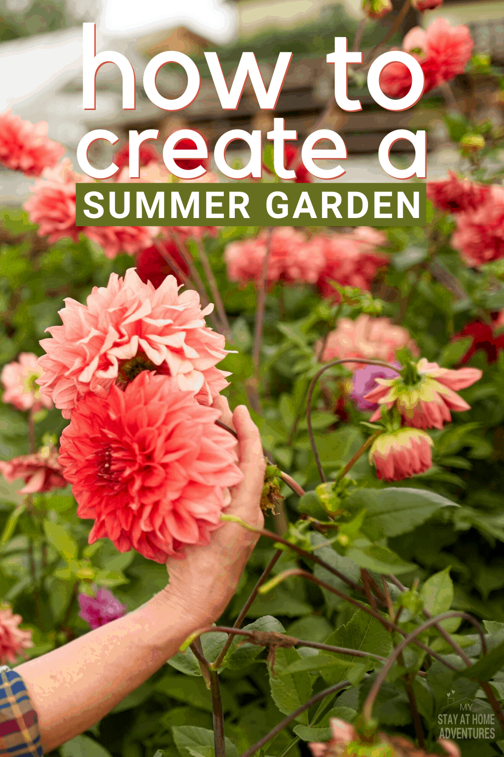 If you are thinking of starting a summer garden, then follow these steps. Find out how you can create a summer garden on a budget today. #garden #gardeningtips #howto #organicgarden #summergarden #springgarden via @mystayathome