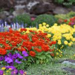 How To Create a Summer Garden on a Budget