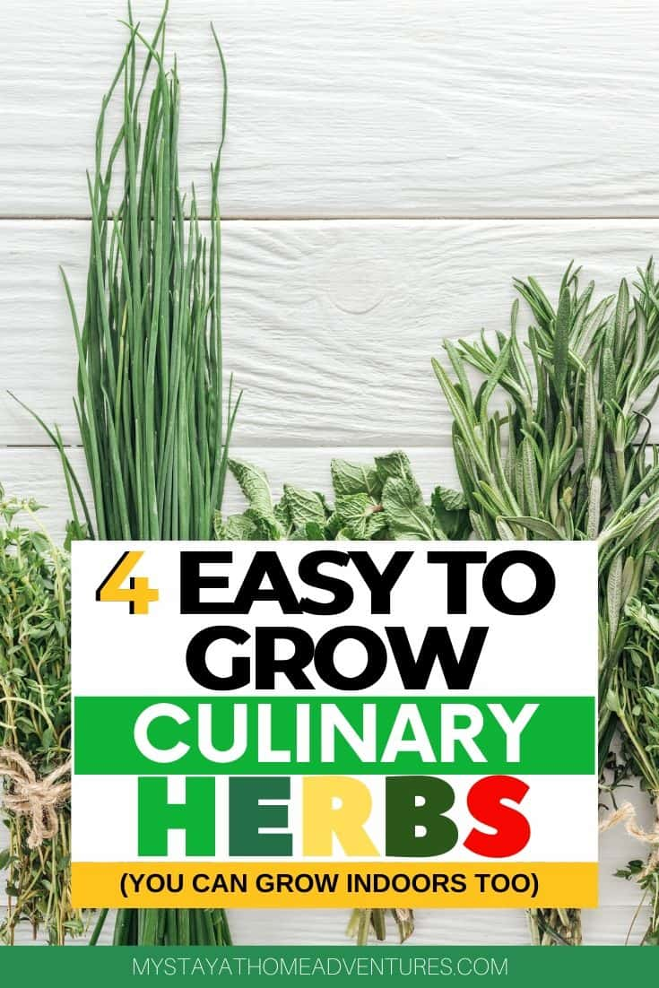 Beginner gardener? Learn how to grow these four easy to grow and versatile herbs in your home. The best thing is that you can grow them indoor and save money. via @mystayathome