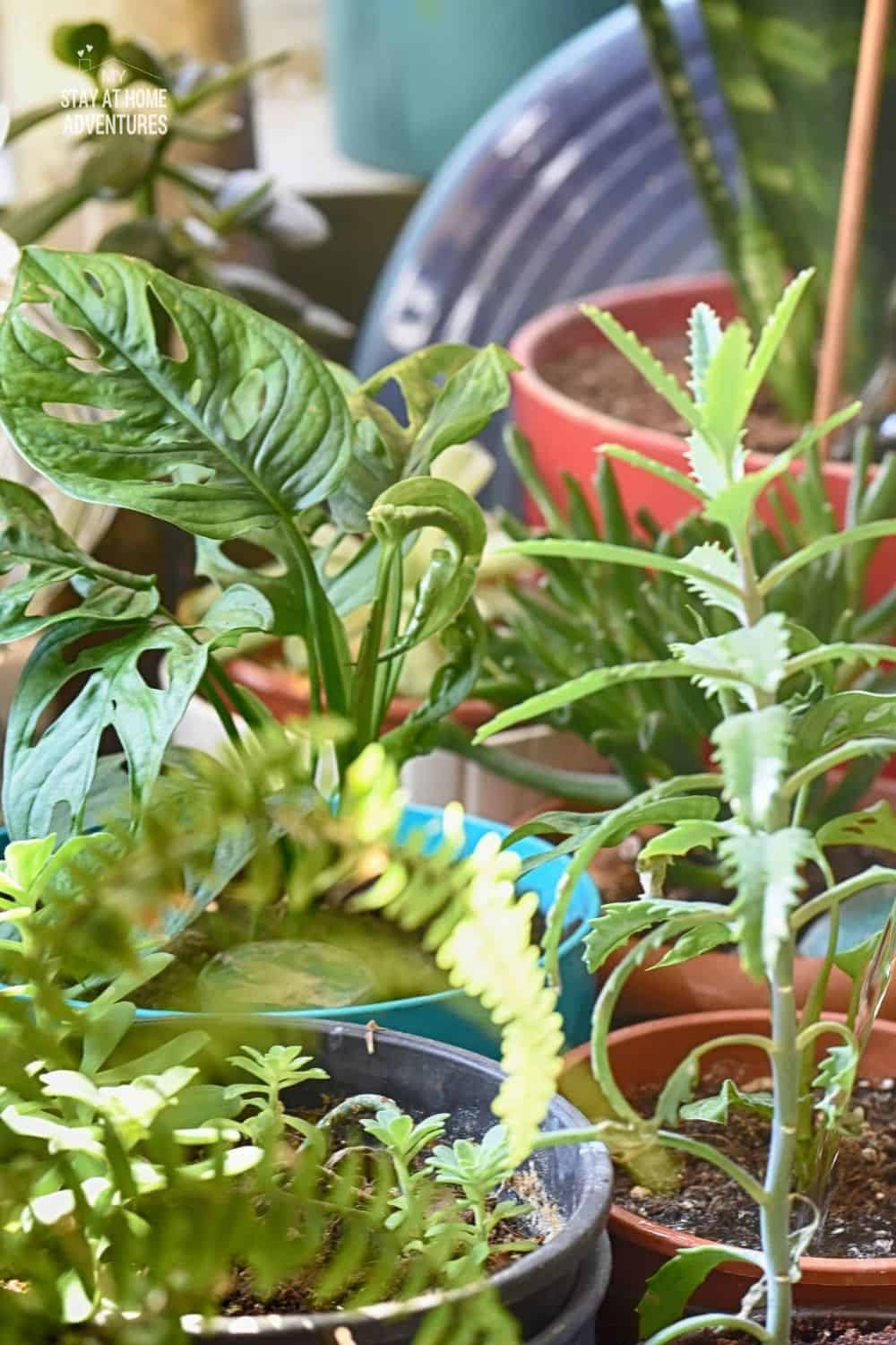 New to indoor gardening? Check out these 6 indoor gardening mistakes beginners should avoid when starting their gardens indoor. via @mystayathome
