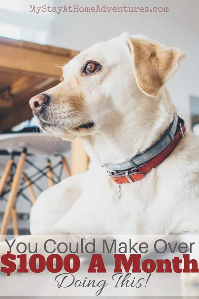 Looking for a way to make extra money? Learn how you could make over $1000 a month doing this! Dog sitting! Learn more and where to get started. via @mystayathome