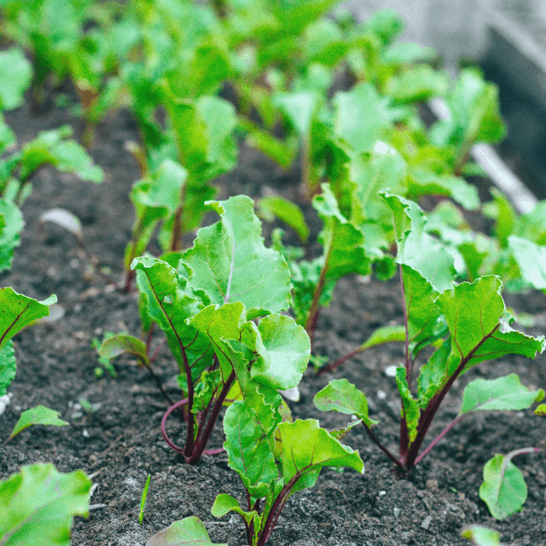 Start a Vegetable Garden This Season: 8 Reasons You Will Love
