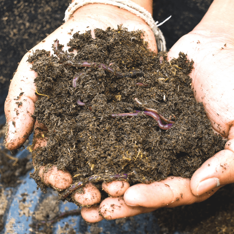 Ways to Attract More Earthworms To Your Garden