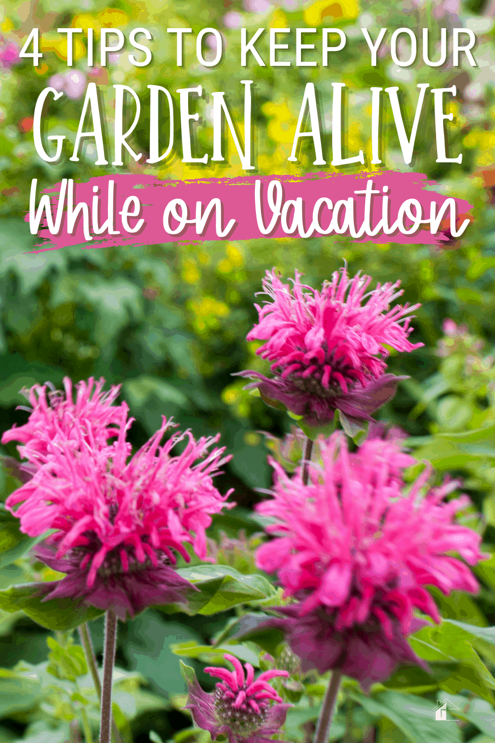 Are you worried about your garden this summer season? Learn four tips to keeping your garden alive while on vacation. You might be surprised to know. #gardening #homegarden #gardeningtips via @mystayathome