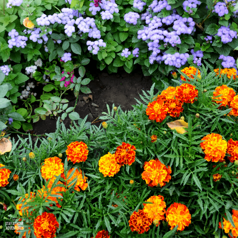 Add Pops of Color to Fall Landscaping