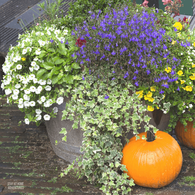 Fall Landscaping Ideas (To Wow Your Neighbors)