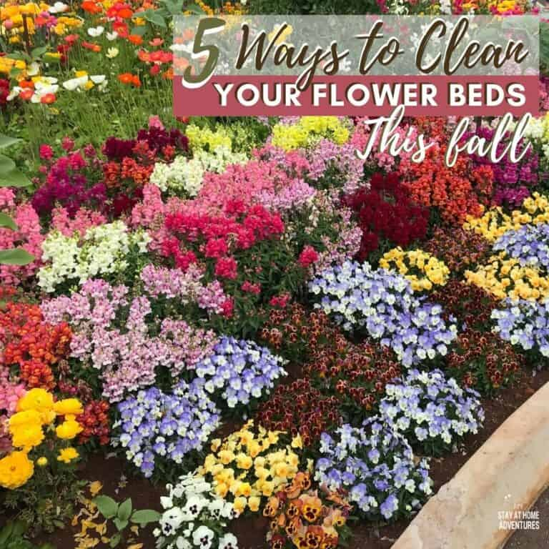 How to Clean Your Flower Beds This Fall
