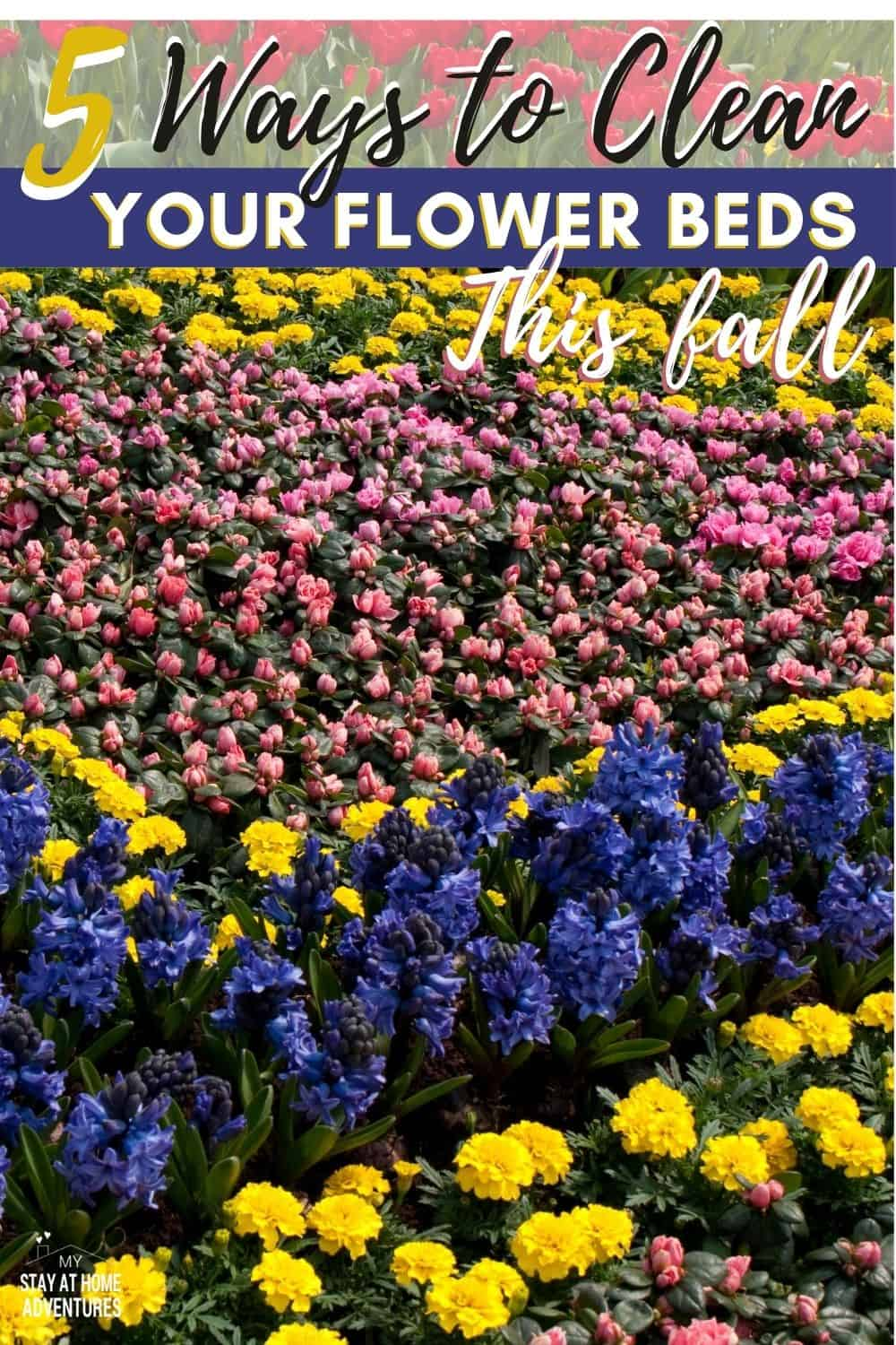 Learn how to clean our flower beds this fall, what tools you are going to need to get this job done, and why you should clean them. #garden #gardening #fallgarden via @mystayathome
