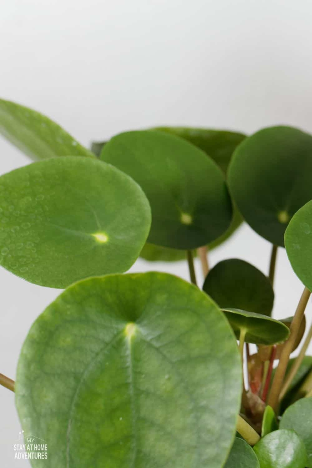 Love houseplant and never owned one? Learn all you need to know about houseplants and what are the five best houseplants for beginners. via @mystayathome