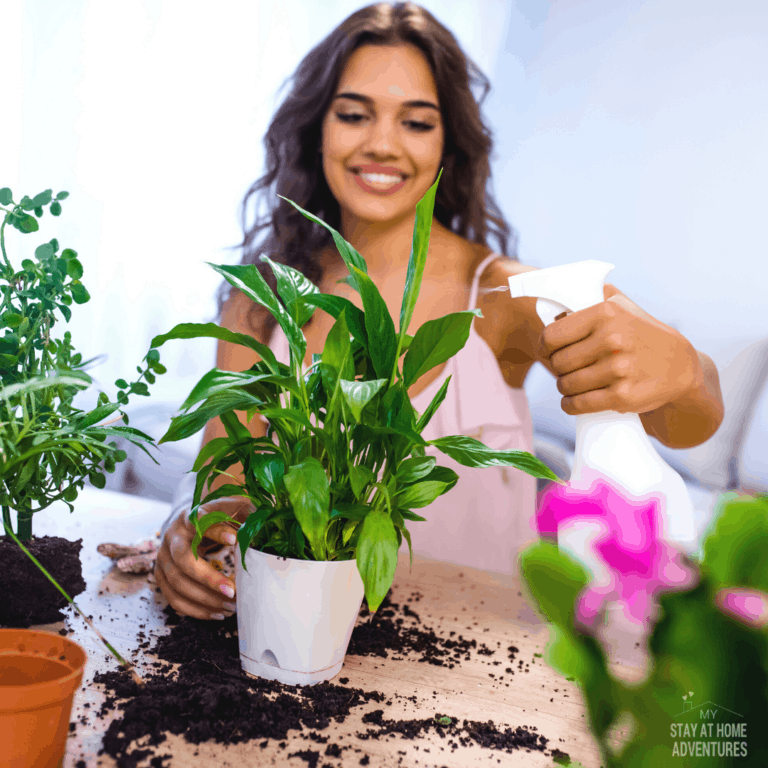 5 of the Best Houseplants for Beginners
