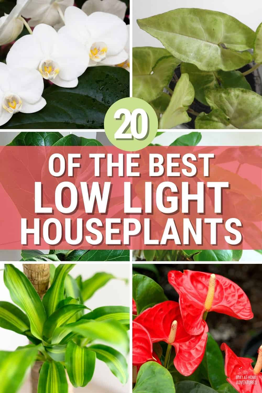 Plants help the environment by cleaning the air we breathe that's why we also bring them indoors. That makes Low Light Houseplants perfect. via @mystayathome