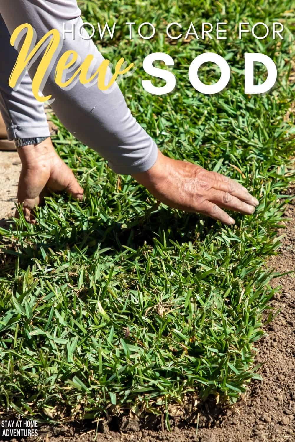 Learn the basics of caring for new sod and answer questions like what type of sod to buy, when it's time to water your lawn, and more. via @mystayathome