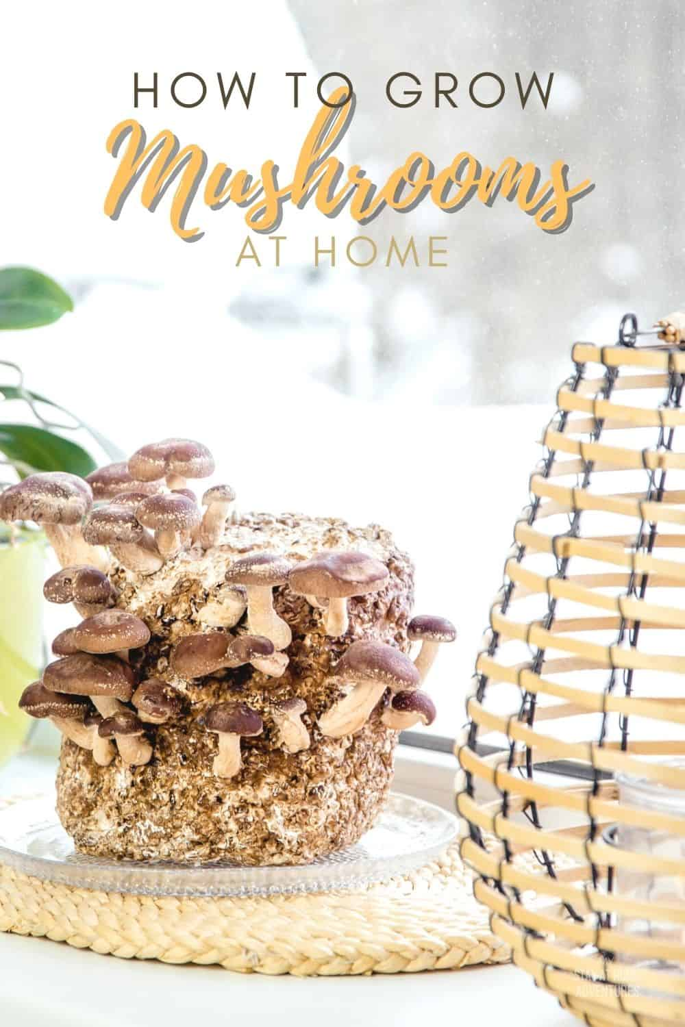 Mushroom is so popular for its low calorie yet packed with health benefits. That's why many like to grow mushrooms at home. via @mystayathome