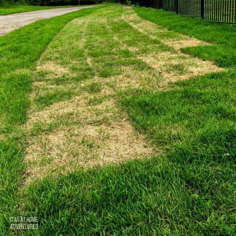 How to Care for New Sod: A Beginner's Guide