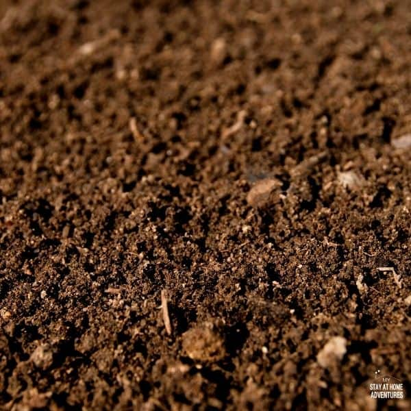 How to Maintain Garden Soil This Summer