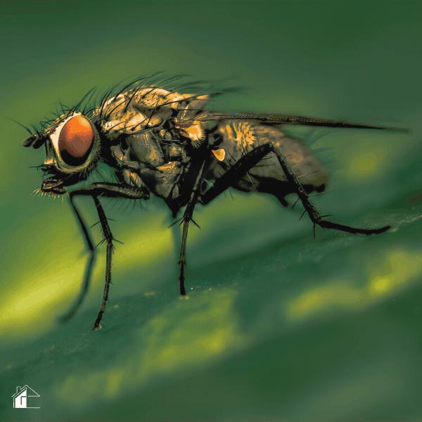How to Repel Flies