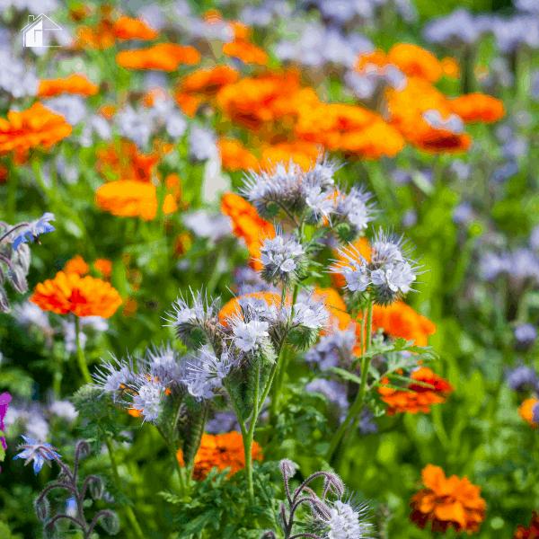 photo of medicinal garden