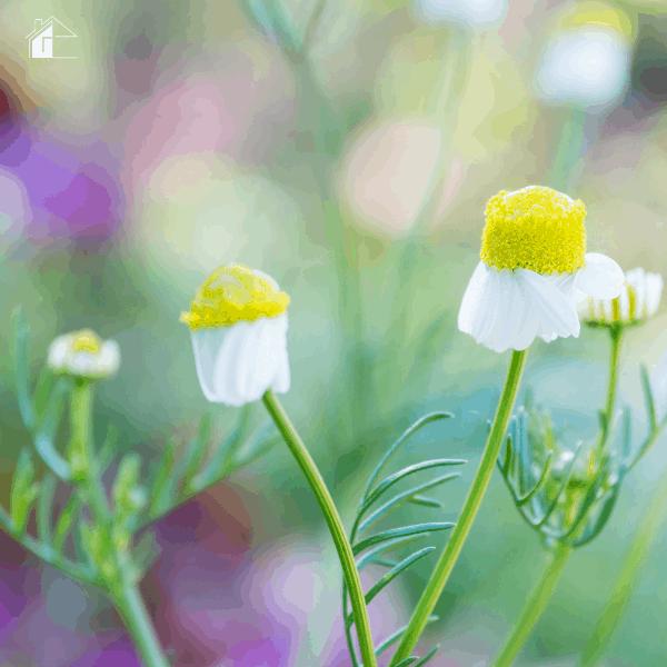 Benefits of Having a Medicinal Garden