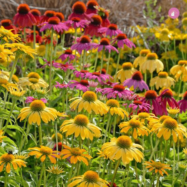 16 Best Medicinal Garden Plants To Grow