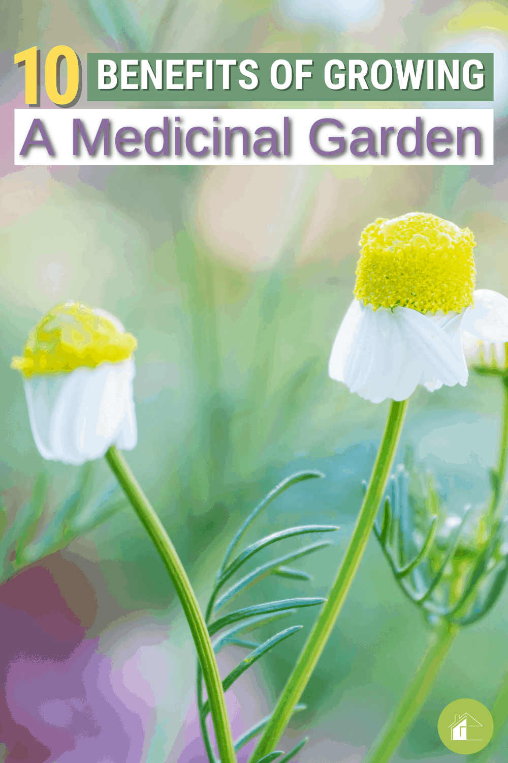A medicinal garden can be good for your health and also save you money. Here are ten benefits to growing one today! via @mystayathome